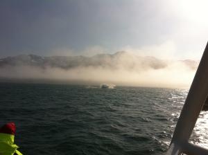 Island 2013 719